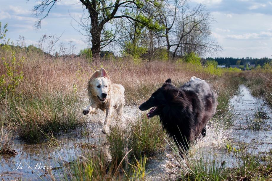 Złe nawyki u psów i ich ludzi