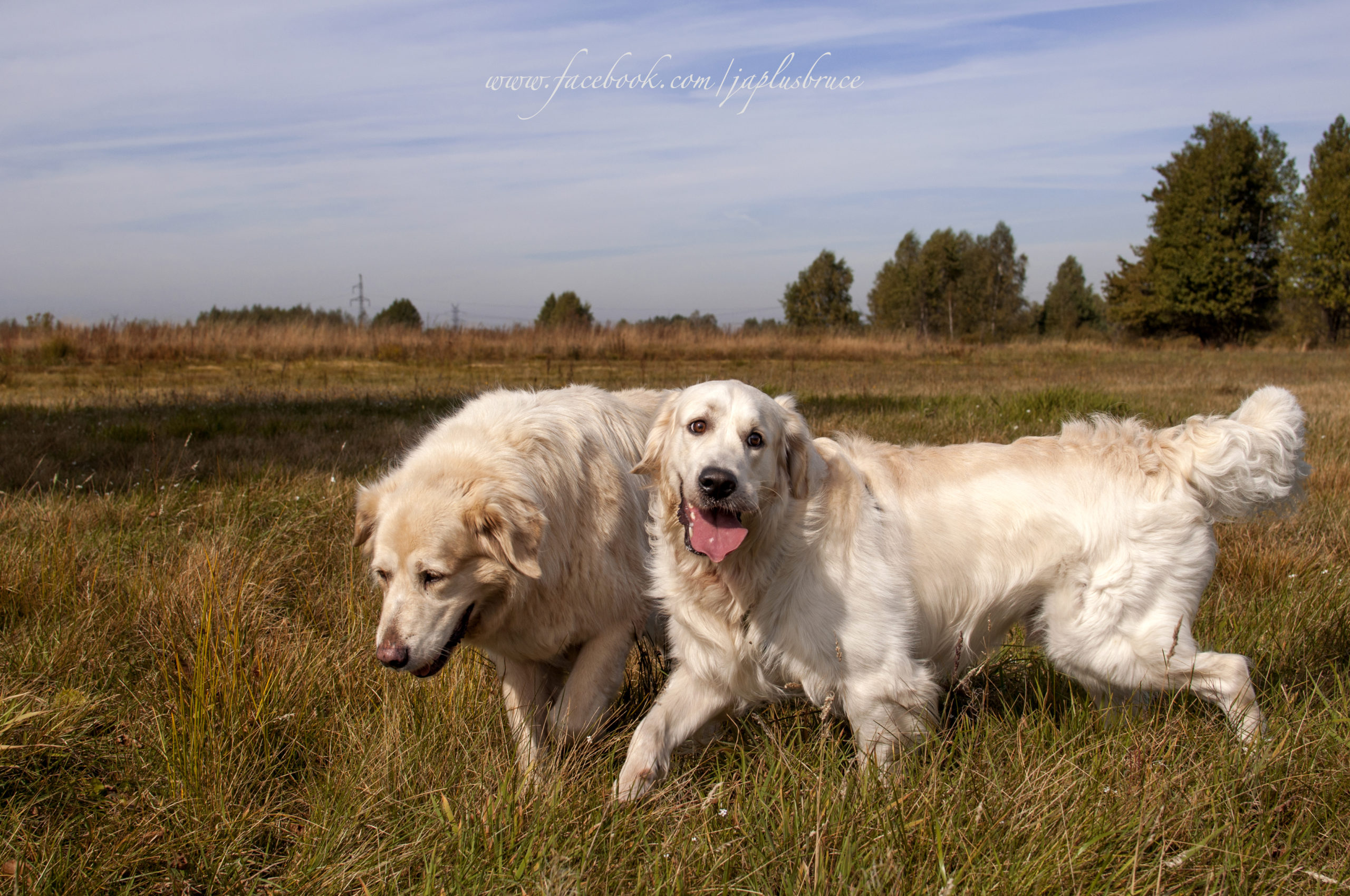 Prawdziwa psia przyjaźń