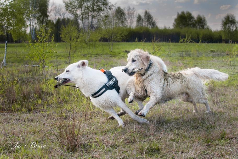 Psi nastolatek na spacerze
