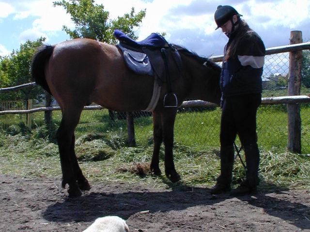 Klocek i kon